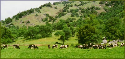 Negus pastures at Bear Creek Ranch